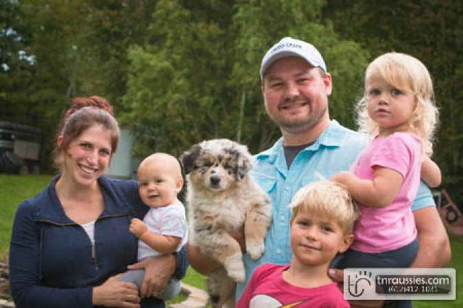 Griffin - Blue Merle Boy - Sold to Allie and family in MN